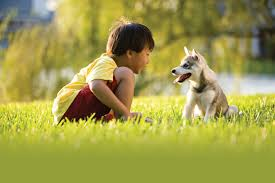 boy with dog in grass